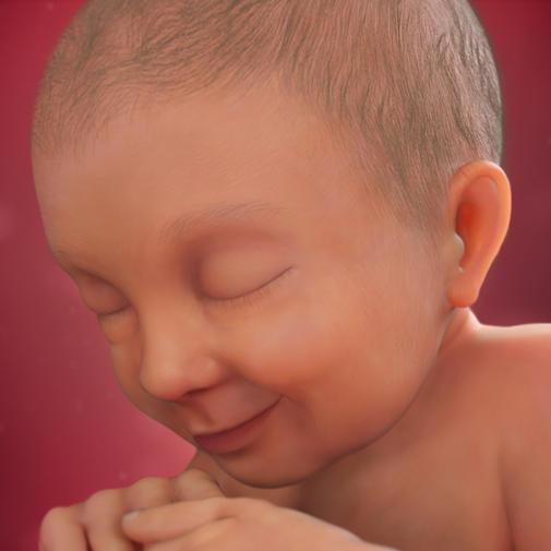 37 nedelja trudnoce