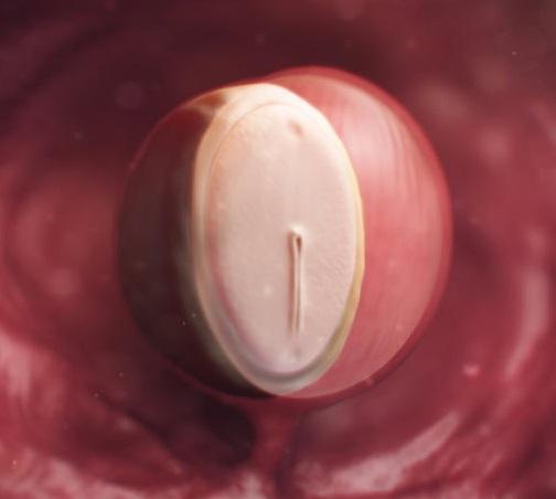 cetvrta nedelja trudnoce