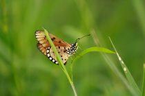 Kako možemo da doprinesemo očuvanju životne sredine?