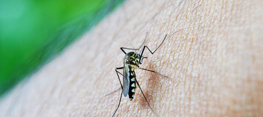 Prirodno sredstvo protiv komaraca za decu