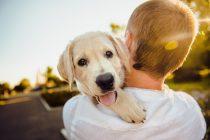Kako odabrati pravu rasu psa?