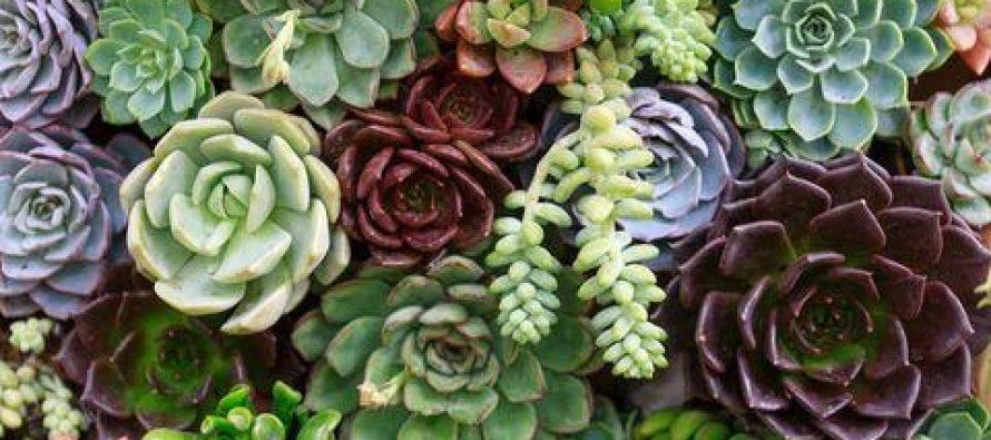 Biljka koja čuva naše zdravlje i dom!